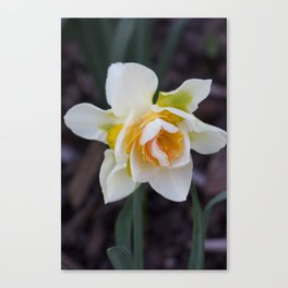 Unruly bloom Canvas Print