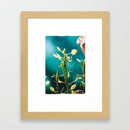ChouChou.3 Framed Art Print