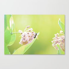 Blooming in the Morning-1 Canvas Print