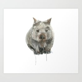 Wombat watercolour Art Print