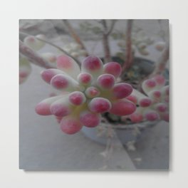 succulent. Metal Print