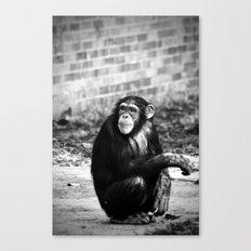 Ape or Trait? Canvas Print