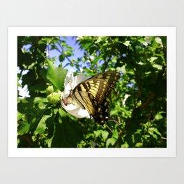 Seasonal Butterfly Art Print