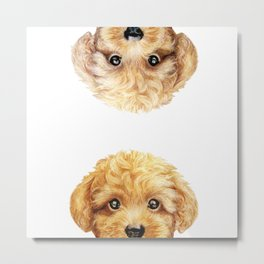 Yellow & Beige toy poodle Metal Print