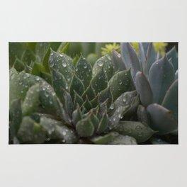 Rained on Cacti Rug