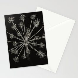 Project 'Decay'. Hogweed (Heracleum sphondylium) Stationery Cards