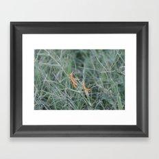 Hoppers Framed Art Print