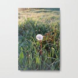 Dandelion clock in surise light Metal Print