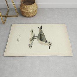 Black-legged kittiwake (Rissa Tridactyla) illustrated by the von Wright brothers Rug