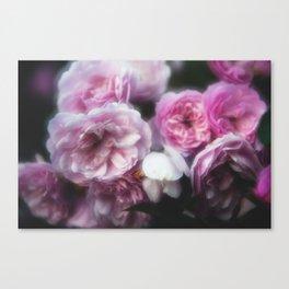 Wild Roses 1 Canvas Print