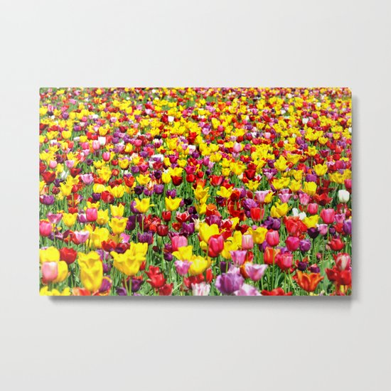 SEA OF TULIPS Metal Print