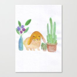 Rabbit cactus  Canvas Print