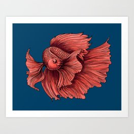 Coral Siamese fighting fish Art Print