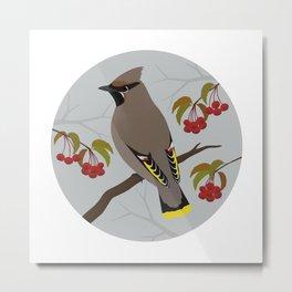 Bohemian Waxwing Metal Print