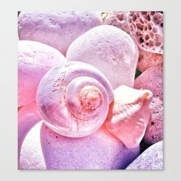 Shells and Stones Canvas Print