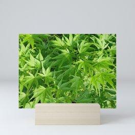 Keep calm and refresh with green momiji leaves Mini Art Print