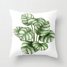 Calathea Green Leaf Plant Throw Pillow