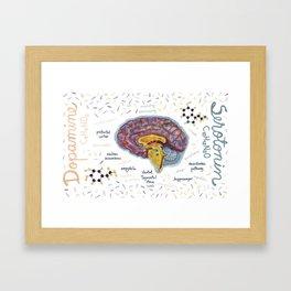 Dopamine and Serotonine in Brain #infographics #chemistry Framed Art Print