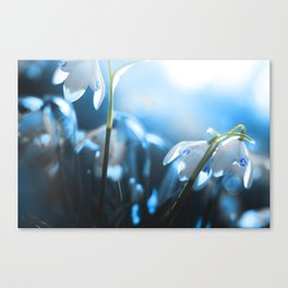 Snow Drop Canvas Print