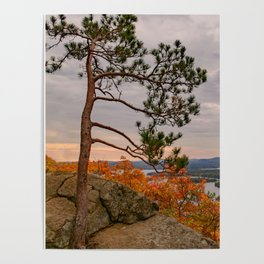 Eagle cliff pines Poster
