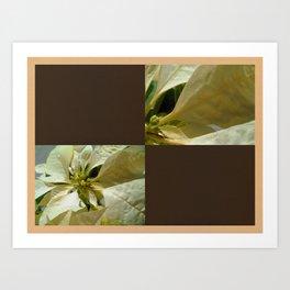 Pale Yellow Poinsettia 1 Blank Q3F0 Art Print