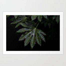 green leaf on black background Art Print
