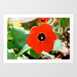 Red Portal Art Print