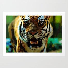 Duluth Tiger  Art Print