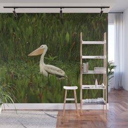 American White Pelican Wall Mural
