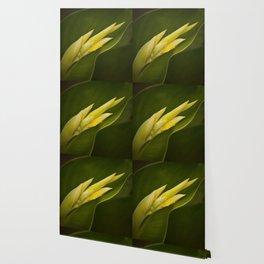 Calla Lily Buds Wallpaper