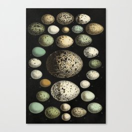 Naturalist Eggs Canvas Print