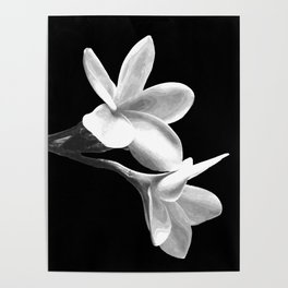 White Flowers Black Background Poster