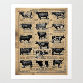 Vintage 1896 Cows Study on Antique Lancaster County Almanac Art Print
