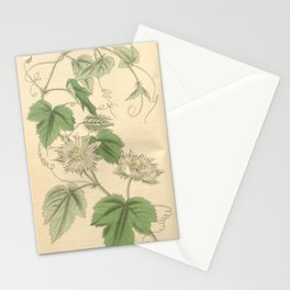 Flower 3635 passiflora nigelliflora Nigella flowered Passion flower1 Stationery Cards