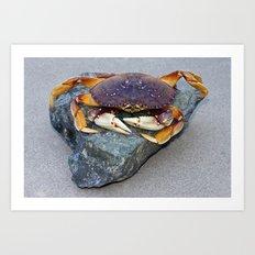 Crab On A Rock Art Print