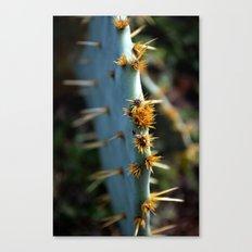 a south Texas cactus.  Canvas Print