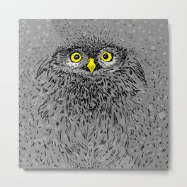Fluffy baby owl staring eyes Metal Print