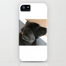 Lab Puppy iPhone Case