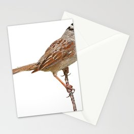 Sparrow Body Feather Bird Support Branch Straight Tail Stationery Cards