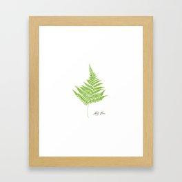 Lady Fern Illustration Botanical Print Framed Art Print