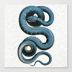 Blue White Vintage Snake Illustration Animal Art Canvas Print