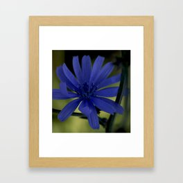 Wild Flower Framed Art Print