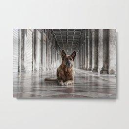A German Shepherd in Venice Metal Print