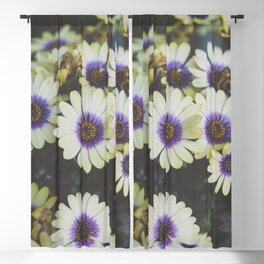 African Daisy Blackout Curtain