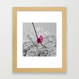 Sakura Blossom Framed Art Print