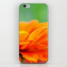 Summer Bloom iPhone & iPod Skin