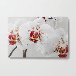 Black and White Orchid With Red Highlights Metal Print