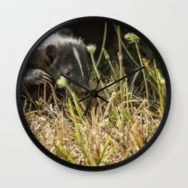 Release of a Young Skunk Wall Clock