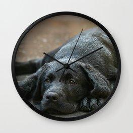 Labrador dog in the rain ! Wall Clock