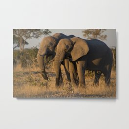 Elephant Pair Metal Print